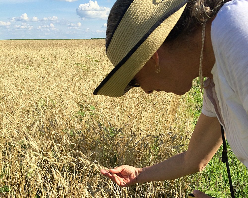 JANIE'S FARM ORGANICS  conducts field trials of many different varieties of wheat and other grains in order to select those that grow well in our corner of the Midwest, have unique flavor profiles, and mill consistently well.