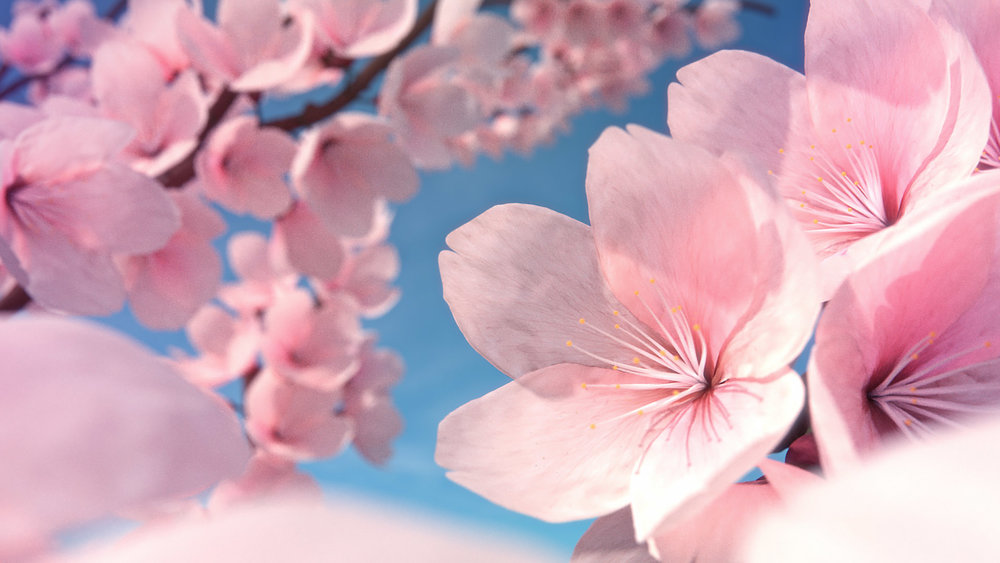 How to make cherry blossom flowers blender guru finished result mightylinksfo