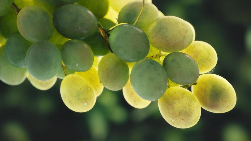 the_grapes.jpg