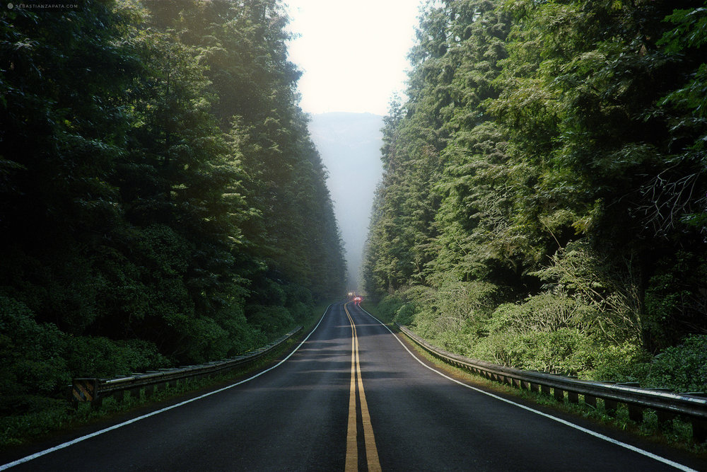 through_the_woods.jpg