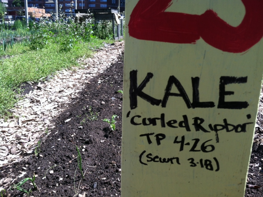 BK Farmyard kale sign 2013.JPG