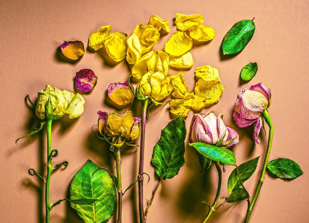 MichelleRiveraSpromberg-RosesHalfwaytoAfterlife.jpg