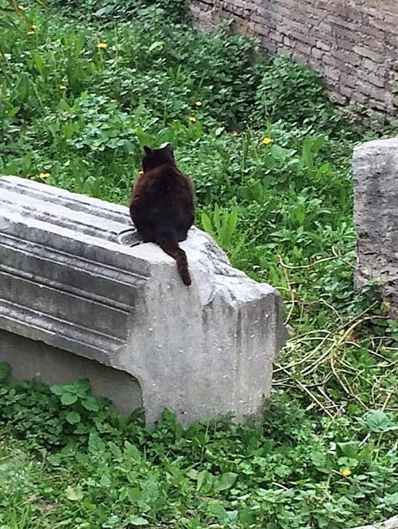 Classical Cat