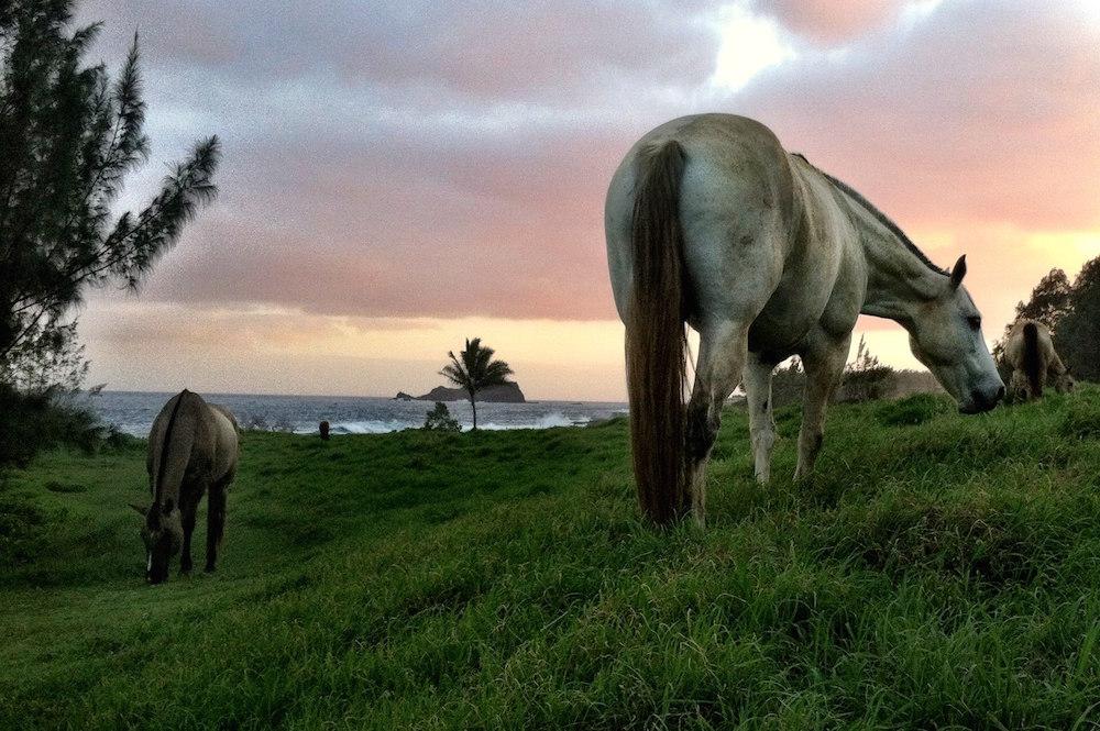 Travaasa-horse.jpg