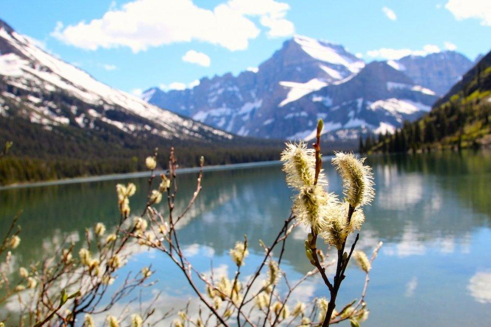 Lake Josephine in Glacier National Park