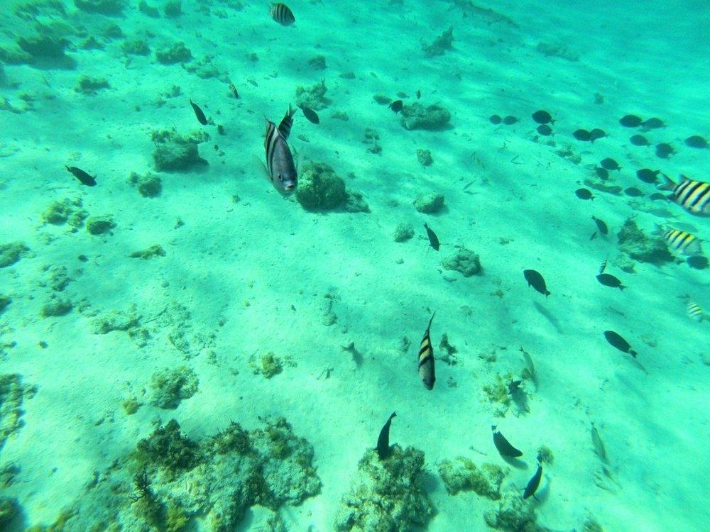 Diving Cayman Brac