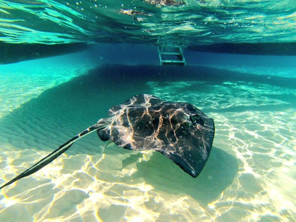 Caymans-Stingray-City.jpg