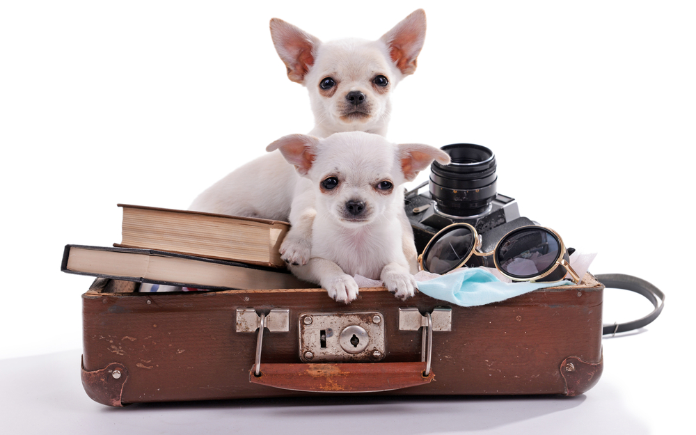 Dogs-in-suitcase.jpg