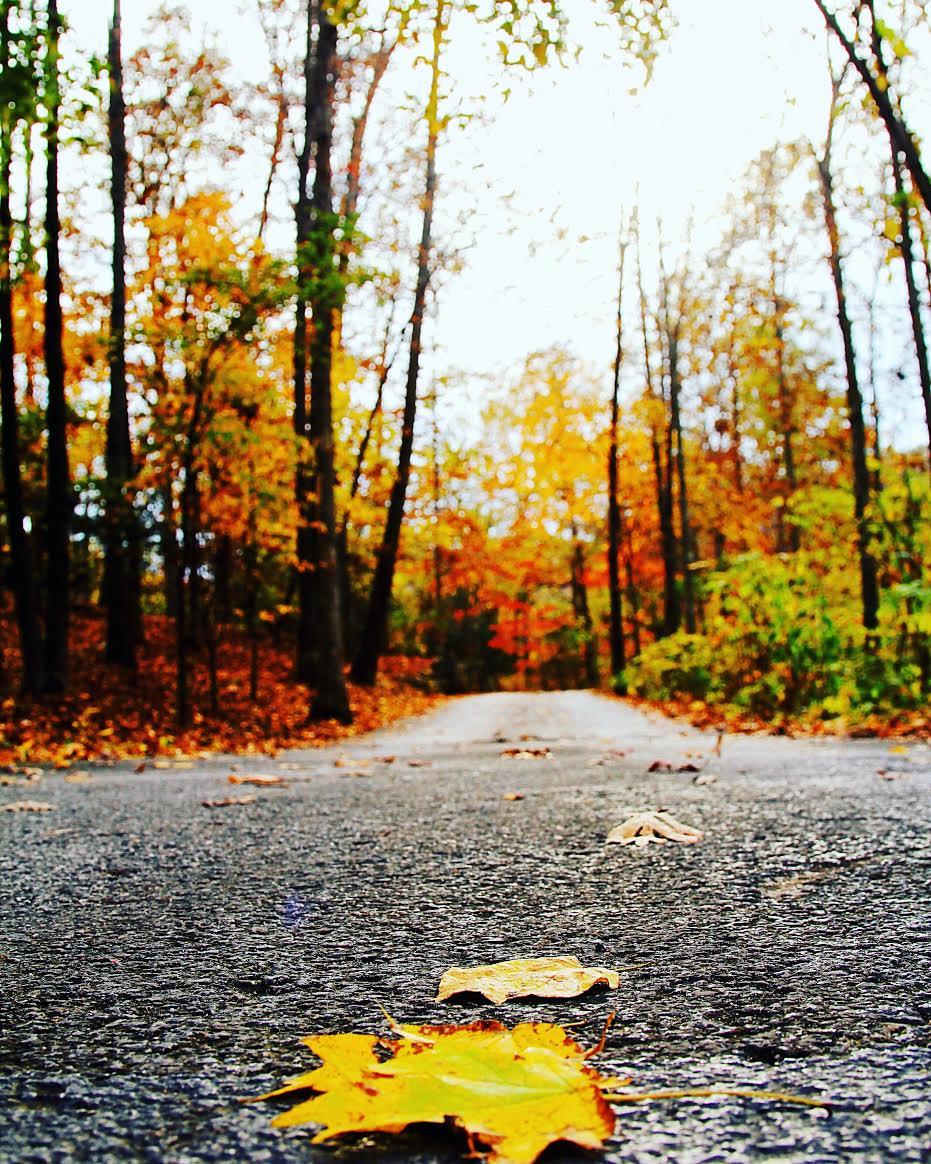 Fall Foliage drive Branson, Missouri