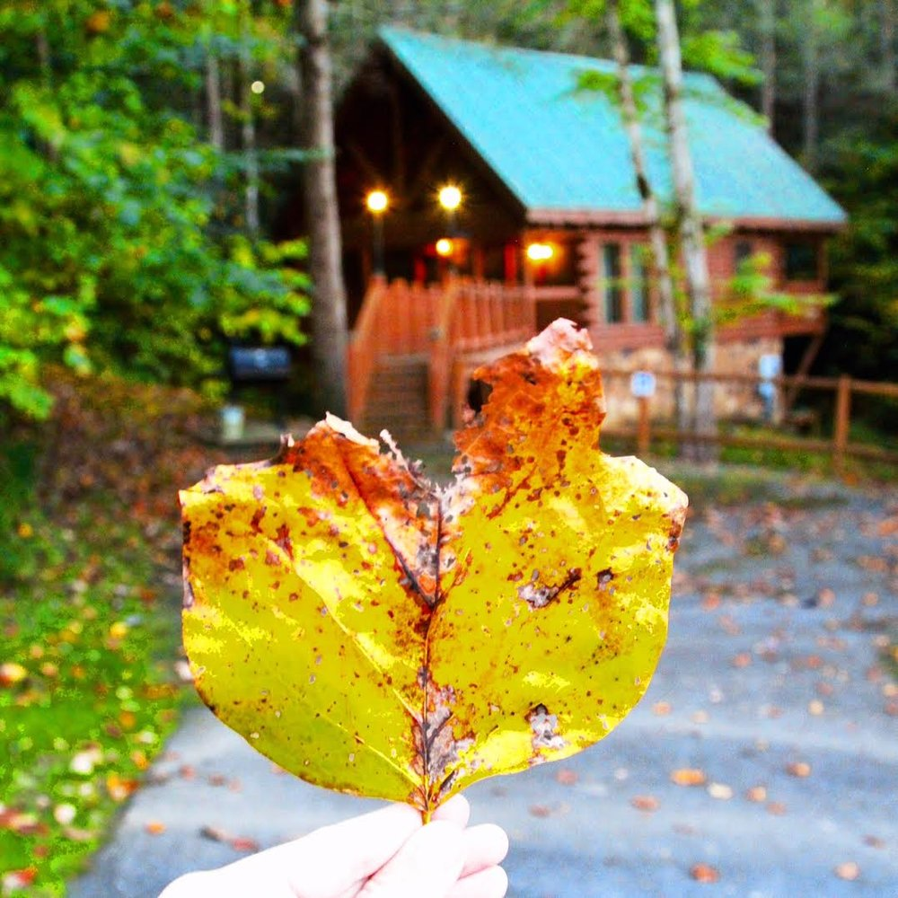 Great-Smokies-Leaf.jpg