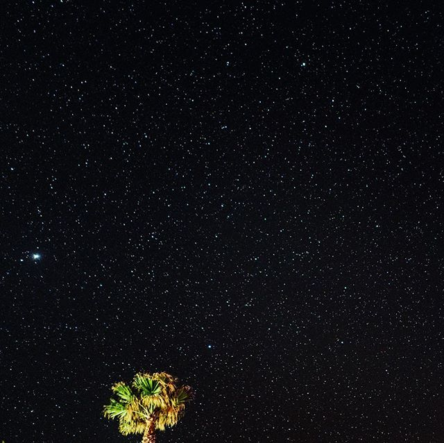 Camping under the stars (and palm trees) and within earshot of crashing waves. Well played Cali. #calilife #calilove