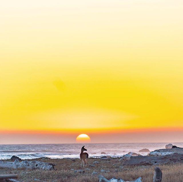All quiet on the Lost Coast. #deerofinstagram #wildlife #calilove