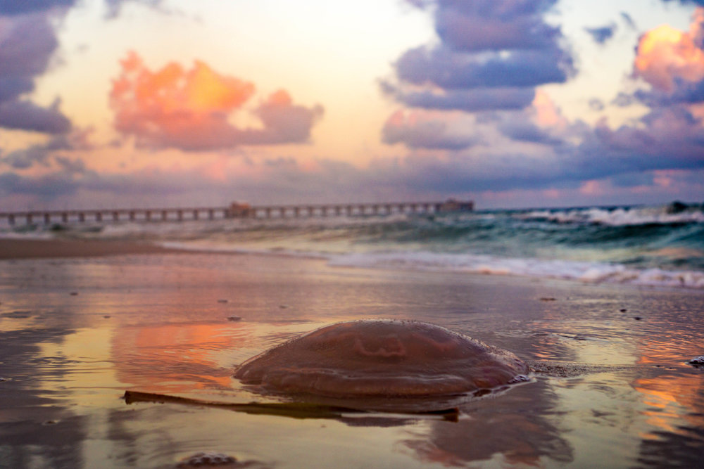 Gulf Shores.JPG