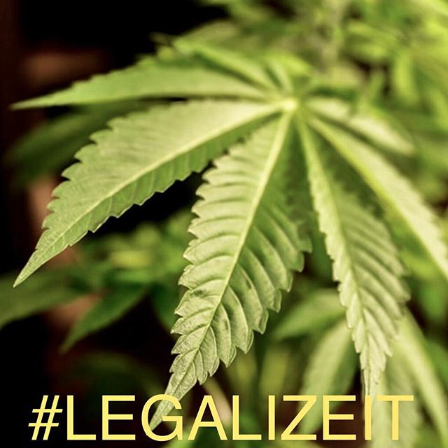"Legalize It! This beautiful plant has been used by our legal system to destroy families and communities while today in several areas our brothers and sisters enjoy this freedom and privilege. Let us not forget the double standard applied to this plant to take away their God given freedom to a massive state or incarceration in which we are controlled and terrorized. ""Get up, Stand up, stand up for your rights""  #Freedom #WeThePeople #StopIncarnation  #LegalizeIT #Cannabis #Ganja #Marijuana #420 #standup #getupstandup #petertosh420 #meditation #medicine"