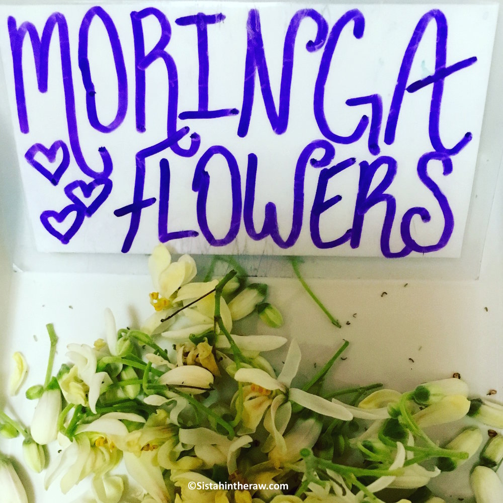 Moringa Flowers.jpg