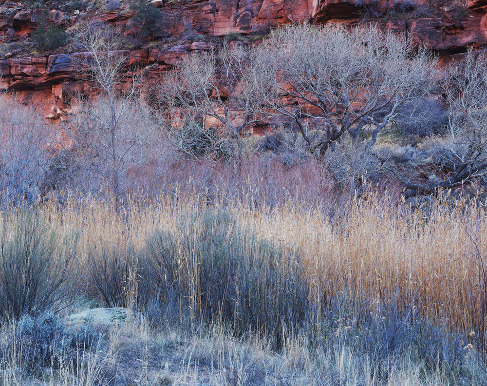 Winter Pastel  | Zion National Park, Utah