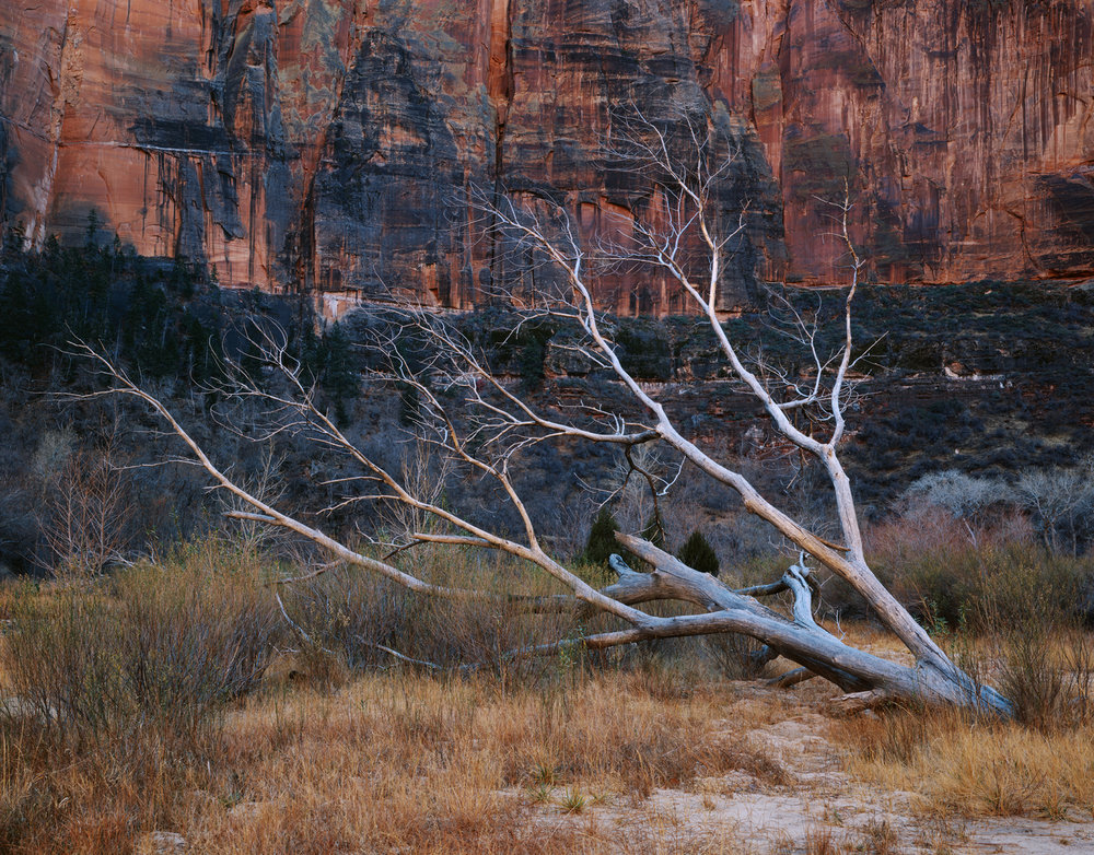 Dignity & Demise  | Zion National Park, Utah
