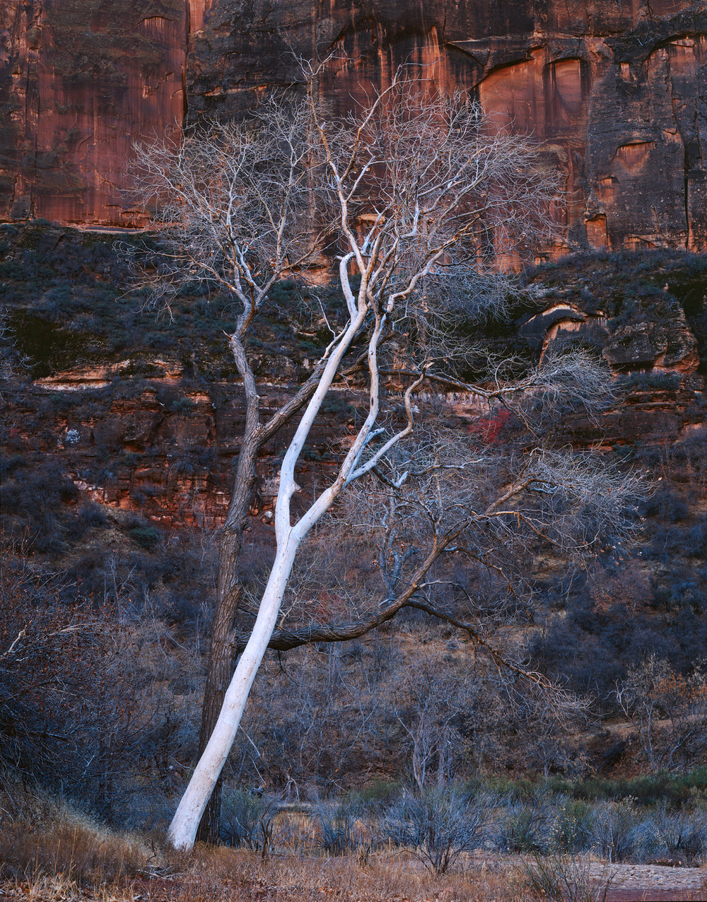 A Love Story  | Zion National Park, Utah
