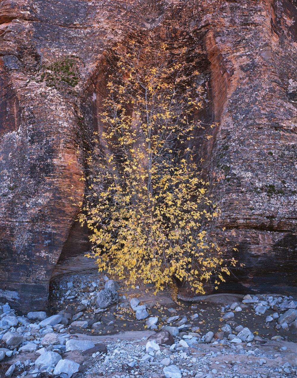 Delicate Grace  | Zion National Park, Utah
