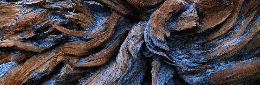 Medusa  | White Mountains, California