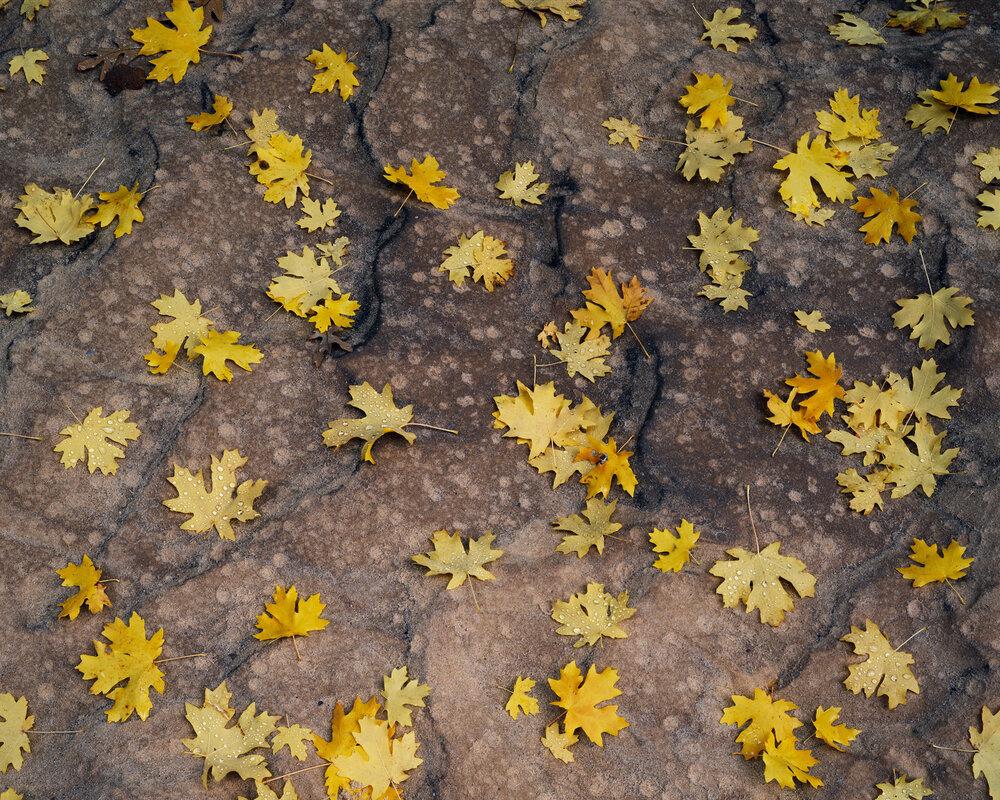 Autumn Rain  | Zion National Park, Utah
