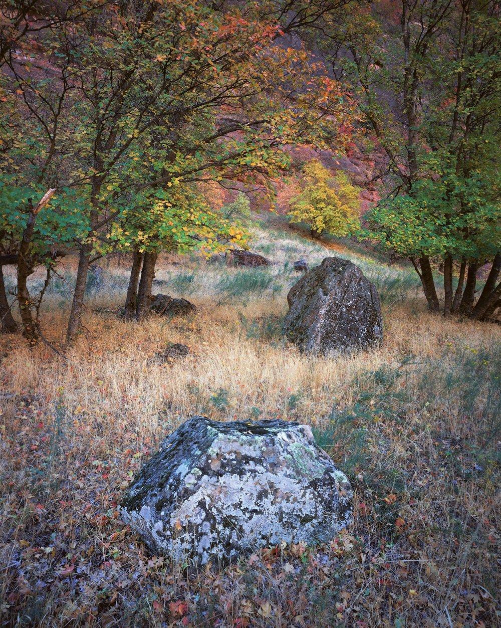 Enlightened Path  | Zion National Park, Utah