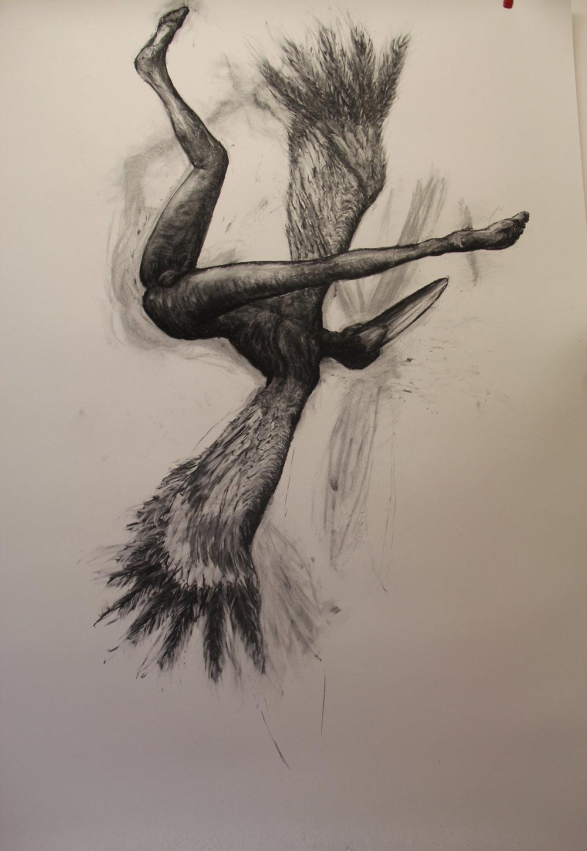 brolga boy,falling ,200x152cm, charcoal on paper.jpg