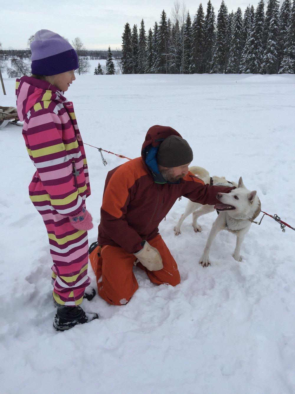 Sled-dog playing
