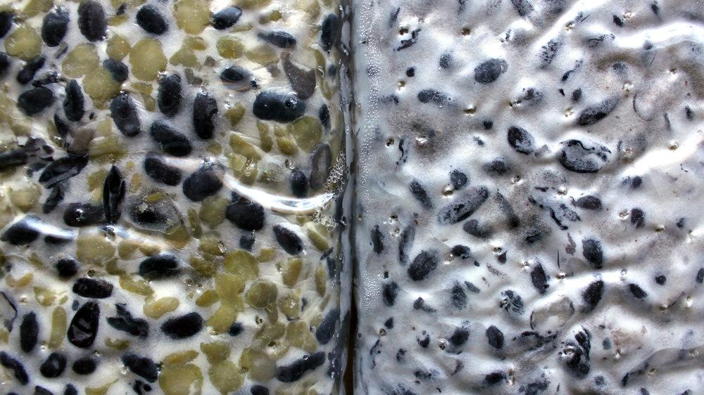 Levo: pravkar odmrznjen tempeh. Desno: svež tempeh.
