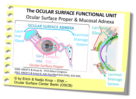 The Complete  Ocular Surface ANATOMICAL UNIT . It consists of the OCULAR MUCOSA,  i.e. the organs that are bathed by the tear fluid  and of the MUCOSAL ADNEXA,  i.e. the organs that manage the tear fluid , either by producing it, as the lacrimal gland, or by draining it after bathing, as the lacrimal drainage system.