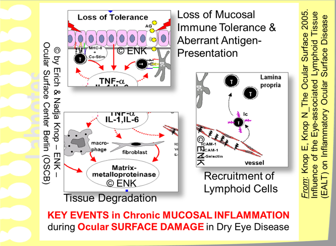 Some  KEY EVENTS  in chronic Ocular Surface Damage of Dry Eye Disease  transform the primary protective Repair Mechanism of Sub-Clinical Inflammation  into a clinically overt  Destructive Chronic Mucosal Immune-Mediated Inflammation