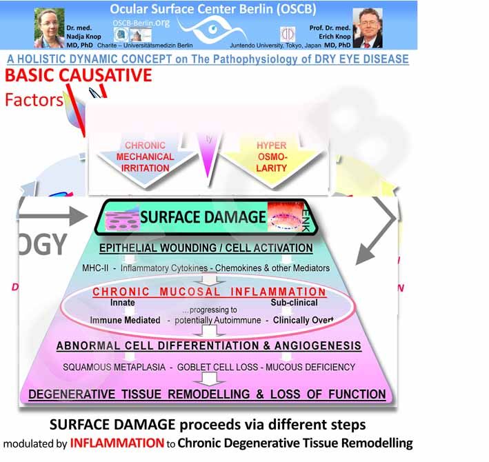 Secondary Pathogenetic Factors in SURFACE Tissue DAMAGE  also form Sequences of increasing severity that propagate the disease process.  Chronic inflammation is the main amplifier of disease  - it gives rise to  several Vicious Circles  and to  a Chronic Tissue Remodeling  with  Loss of Function .