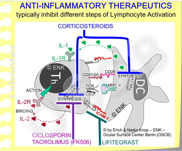 The diagram shows  molecules  that are important  for antigen-presentation and lymphocyte activation  and are thus promising targets for anti-inflammatory Presently used, and highly effective, drugs at the ocular surface typically block the synthesis of two important  interleukins  (soluble signaling molecules abbreviated by  IL  and a   number  ) for lymphocyte activation (IL-1 and IL-2). Lifitegrast is using another target in the form of blocking the interaction of adhesion molecules. Apart from many other functions in inflammation, these also assist in antigen-presentation by mechanically linking the respective cells - please see below for ´Lifitegrast´.