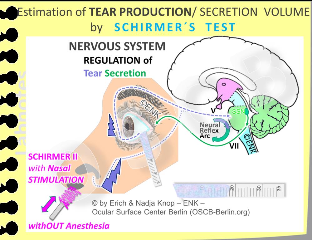 SCHIRMER-2 Test:  Der SCHIRMER-1 Test   mit  nasaler Stimulation  ist eine Modifikation des einfachen Schirmer-1 Tests ( ohne Anästhesie ). Dabei wird die nasale Mukosa durch ein Baumwollstäbchen während der gesamten Dauer (5min) des Tests gereizt. Dieser Test ist nützlich, wenn der normale Schirmer-1 Test ein grenzwertig niedriges Ergebnis hatte. Der Schirmer-2 Test prüft die maximale Sekretionskapazität der wässrigen Tränendrüsen und die Ergebnisse dieses Tests zeigen die beste Korrelation mit einer Epithelschädigung bei Vitalfärbung mit dem Rose Bengal Farbstoff.