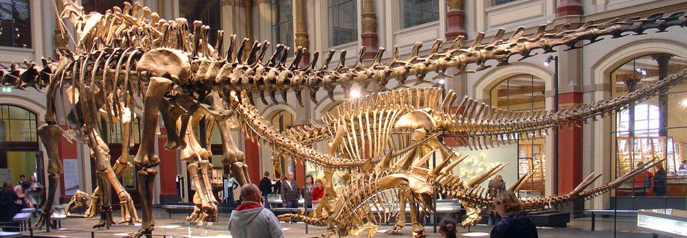 Naturhistorisches Museum, Saurierskelette_DSC09781._OPT, 900p.jpg