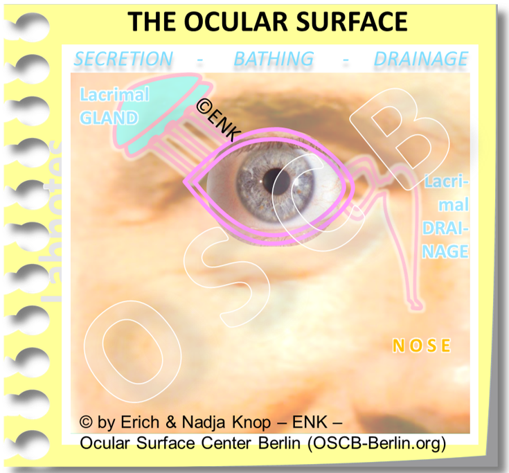 Copy of The Ocular Surface in DETAIL