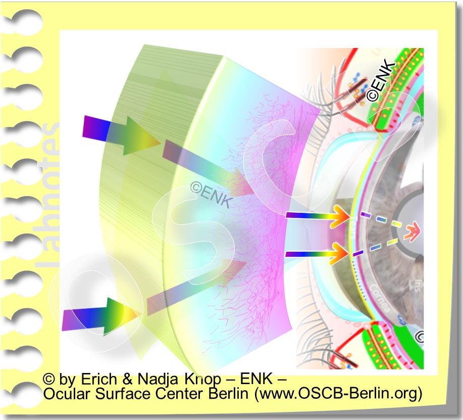 OSCB-Berlin.org_(c)ENK_Trockenes-Auge,-Dry-Eye-Disease,-Contact-Lens,-Kontaktlinse__TRÄNENFILM ohne Text_.jpg