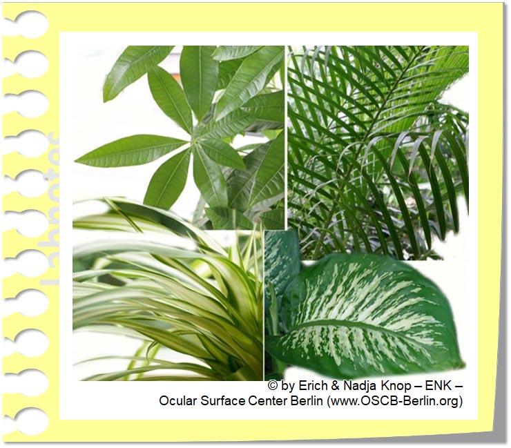 PLANTS against Dry and Polluted Air in Dry Eye Disease_PFLANZEN geben Trockene und Staubige Luft beim Trockenen Auge_20__.jpg