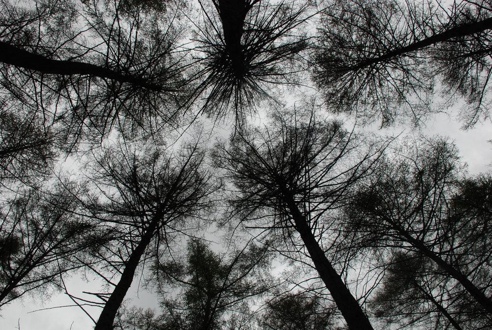 Peak District Trees
