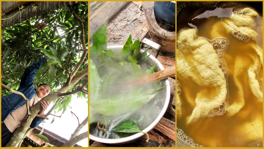 Left to right: Sang pulling mango leaves from a tree at the handicrafts center; then the mango leaves are boiled for a couple hours, creating a wonderful sweet yellow for dyeing woven cotton.