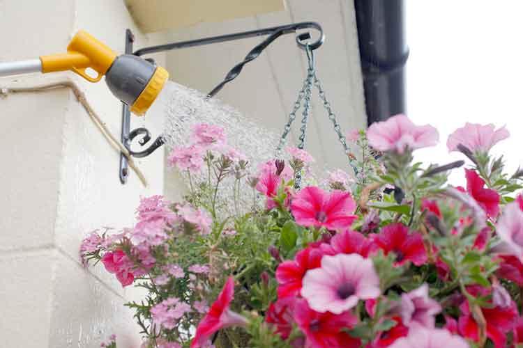 Water-hanging-baskets.jpg