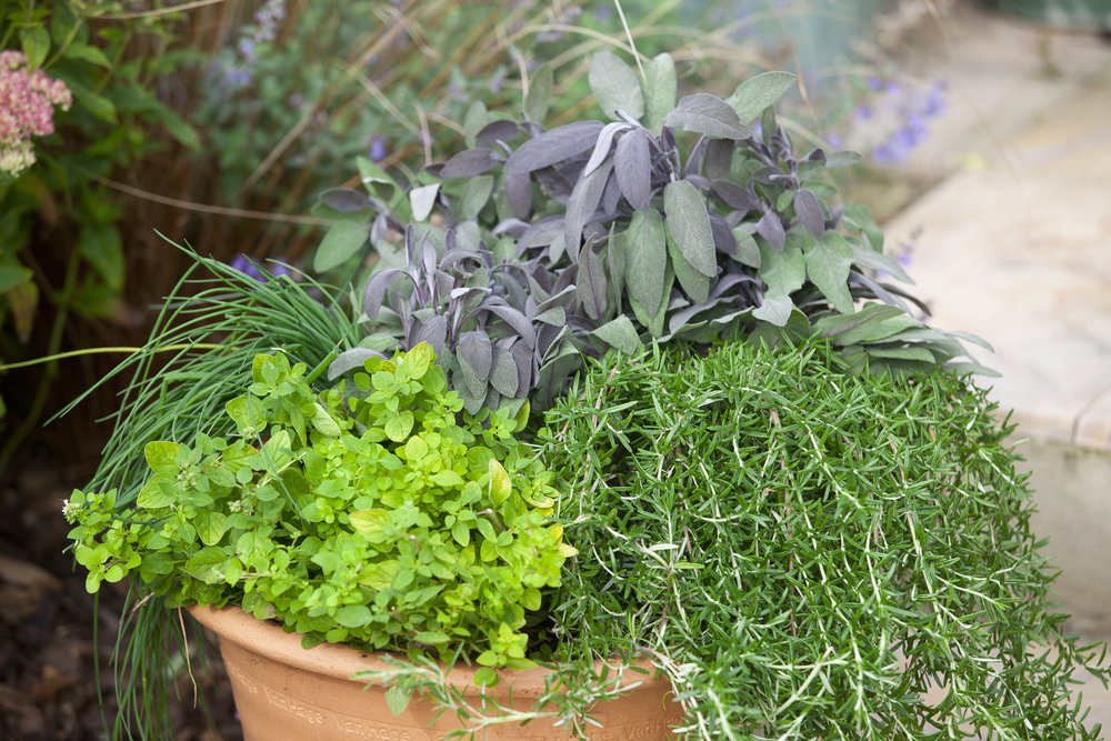 herbs%20in%20a%20pot_BAUER.JPG