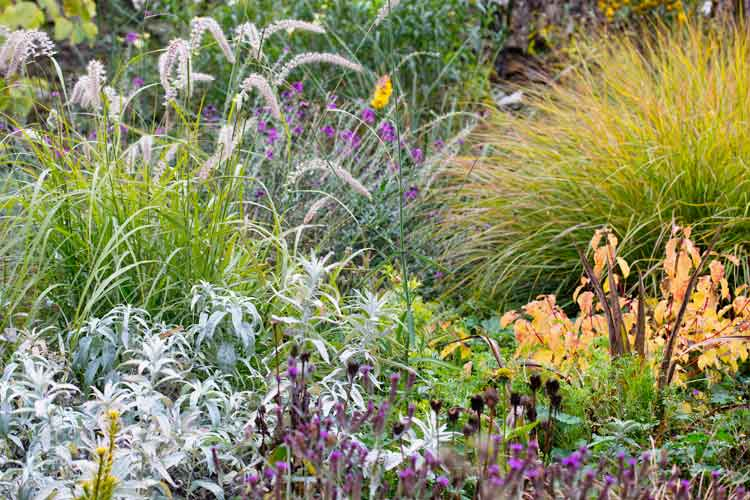 bauer_-anemanthele-and-pennisetum-in-border.jpg