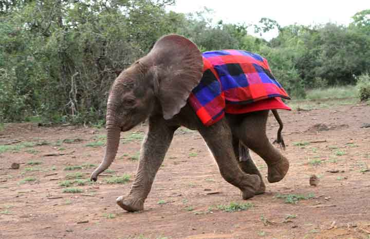 blankets for baby elephants yours