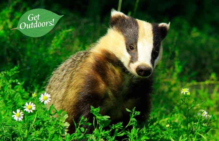 5-wildlife-days-out_720x405.jpg
