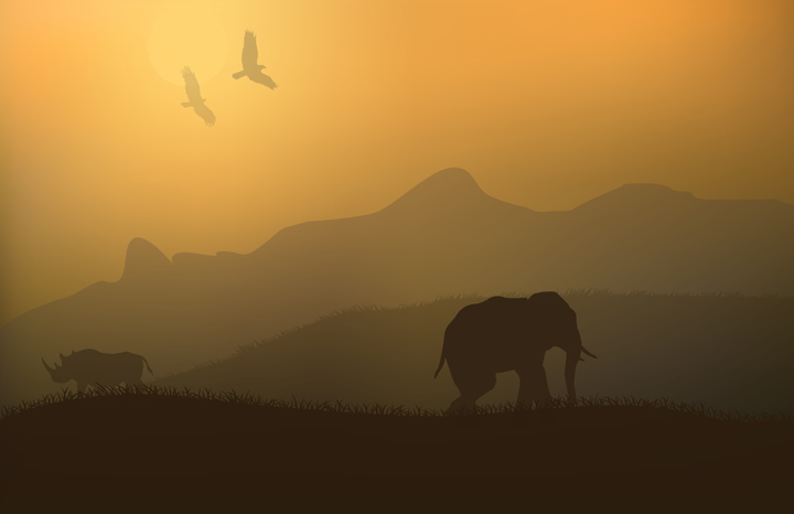 rhino%20elephant%20web.jpg