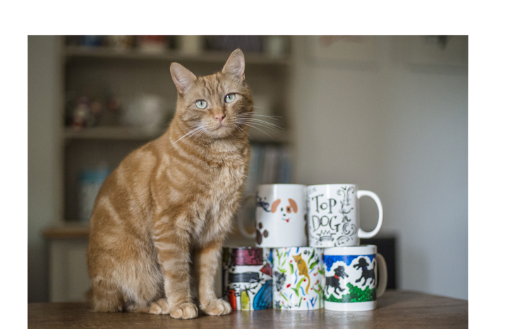 Mugs%20cat%20web.jpg