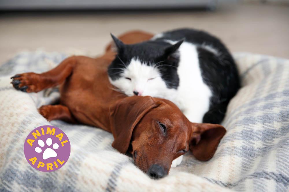 rescue-pets%20copy.jpg