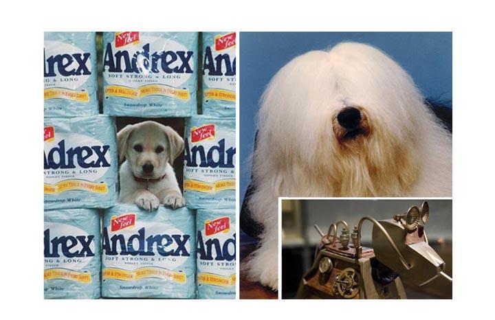 Dogs%20copyright%20REX.jpg