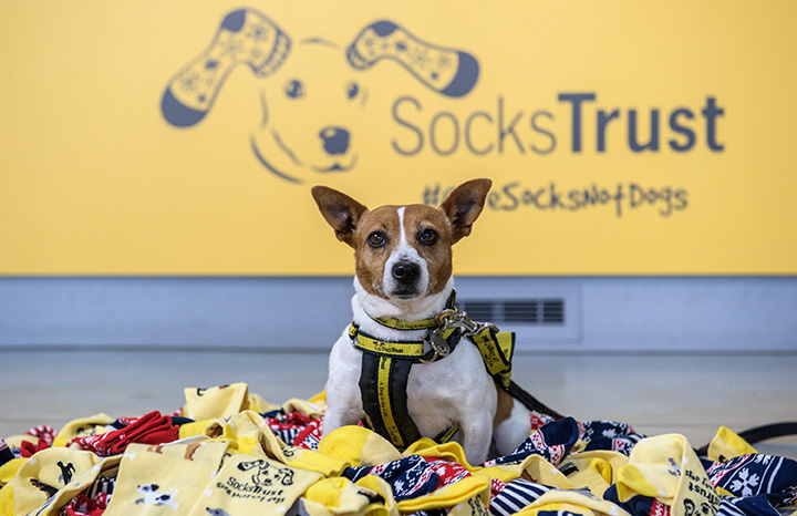 dogs-trust-charity-socks.jpg